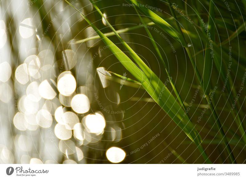 Schilf und Licht Schilfgras Wasser Lichtpunkte Gras grün Stimmung Sommer Natur See ufer Außenaufnahme Farbfoto Reflexion & Spiegelung ruhig