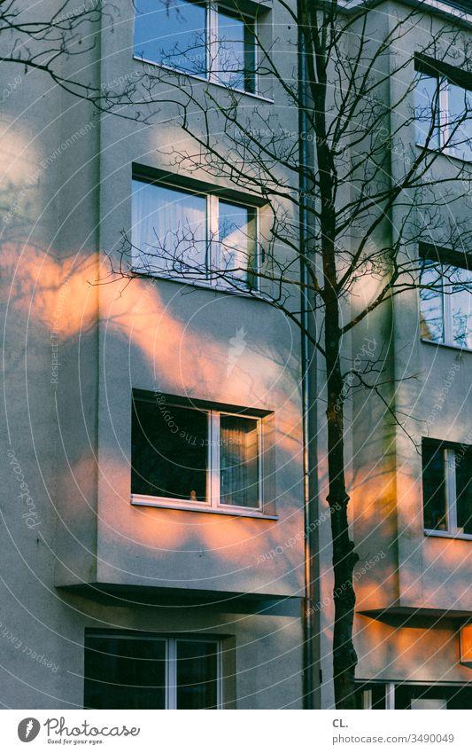 erleuchtung Haus Fenster Wohnhaus Baum Licht Lichterscheinung Lichtspiel offenes fenster Fassade Mehrfamilienhaus Wohngebiet Stadt Herbst wohnen Menschenleer