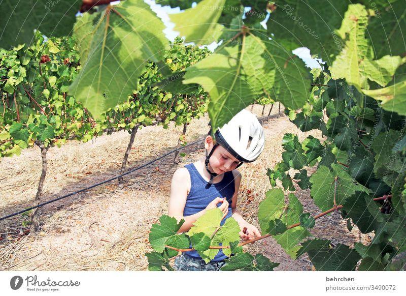 winetasting besonders Weinstock Weinreben Weintrauben Fahrradhelm Kindheit Abenteuer Ausflug Tourismus Ferien & Urlaub & Reisen Fernweh Ferne Freiheit Natur