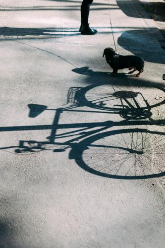 fahrrad, dackel, beine Fahrrad Hund Dackel Beine Wege & Pfade Schatten Schattenspiel Person Straße Tier Haustier Tierliebe Außenaufnahme niedlich