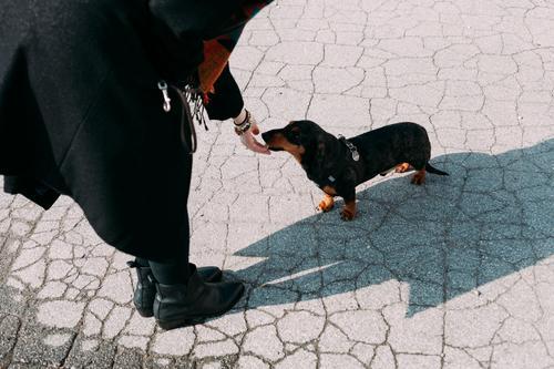 feeeeiiiiiin Hund Dackel Tier Haustier Tierliebe niedlich Frau leckerli Tiergesicht Tierporträt belohnung carlson Hundefutter Hundeschnauze