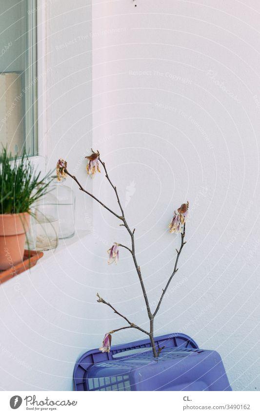 zweig auf wäschekorb Zweig Zweige u. Äste Blütenknospen Blühend Wäschekorb Pflanze Fenster Balkon Topfpflanze Blumentopf Häusliches Leben zuhause