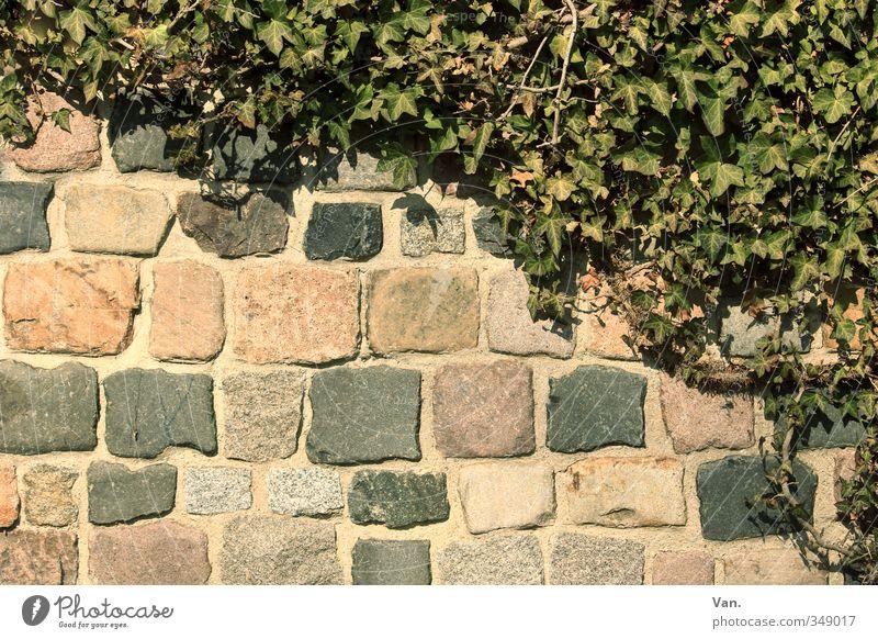 \ Natur grün Pflanze gelb Wand Frühling Mauer Stein Efeu