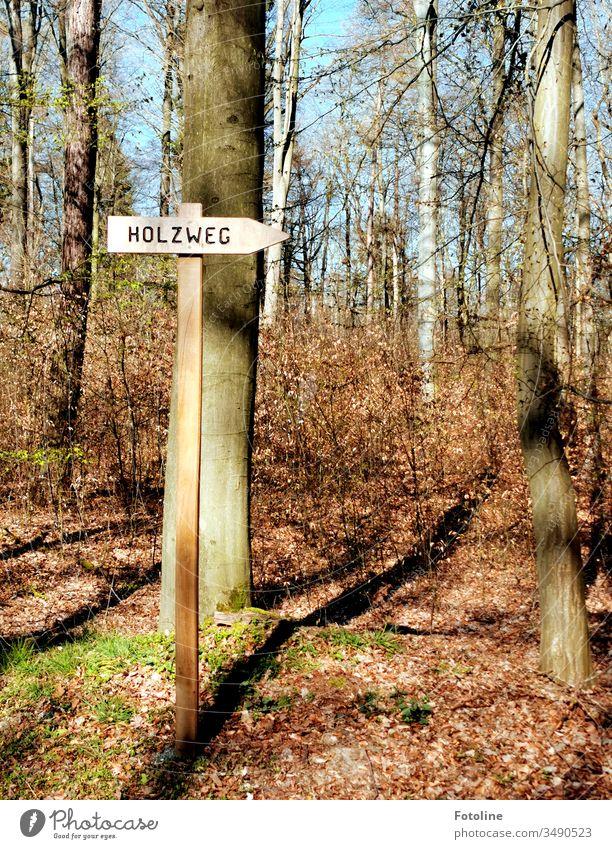 Da war ich wohl auf dem Holzweg ;-) - oder ein Wegweiser mit der Aufschrift Holzweg in einem Wald im Frühling. Auf dem Waldboden liegt noch das restliche Herbstlaub.