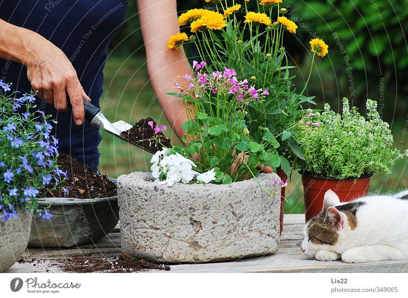 Blumenpflanzung Freizeit & Hobby Gartenarbeit Gärtner Erde Pflanze Gras Blatt Blüte Topfpflanze Arbeit & Erwerbstätigkeit Farbfoto Außenaufnahme Tag