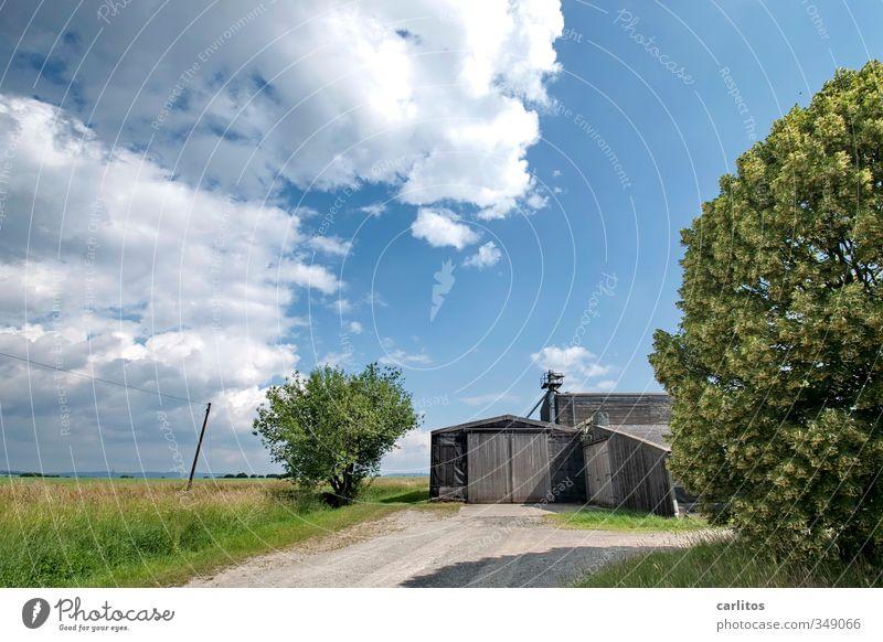 und es war Sommer ...... Umwelt Natur Landschaft Erde Luft Himmel Schönes Wetter Baum Gras Sträucher Feld blau grün Scheune Scheunentor Landwirtschaft Wolken