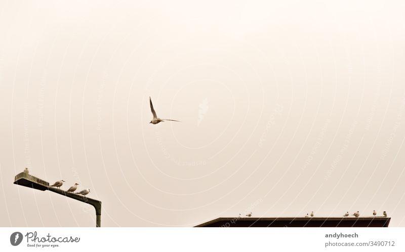 der einzelne Flieger abstrakt Tier Architektur Kunst Hintergrund Hintergründe Vogel Vögel Großstadt Stadtbild Konzept Textfreiraum kreativ Kundgebung Design