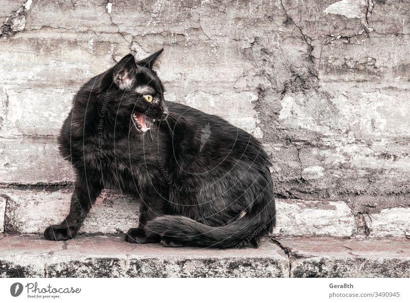 aggressive wütende schwarze Katze sitzt in der Nähe eines alten Hauses und beobachtet Erwachsener Aggression Wut Tier Tier-Thema Baustein braun Gebäude