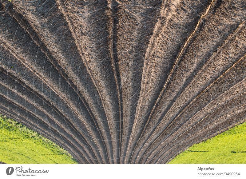 lecker Spargel ? Ansichtssache Acker Farbfoto Ackerboden Ackerbau Landwirtschaft Außenaufnahme Landschaft kopfüber Feld Menschenleer Ernte Umwelt Spargelzeit