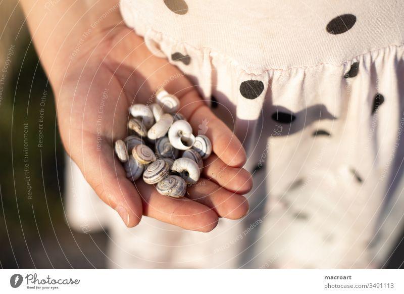 Kind sammelt Schneckenhäuser kind schneckenhaus schneckenhäuser verlassen leer sammlung sammeln hände kinderhände punkte gepunktet weiblich mädchen schulkind