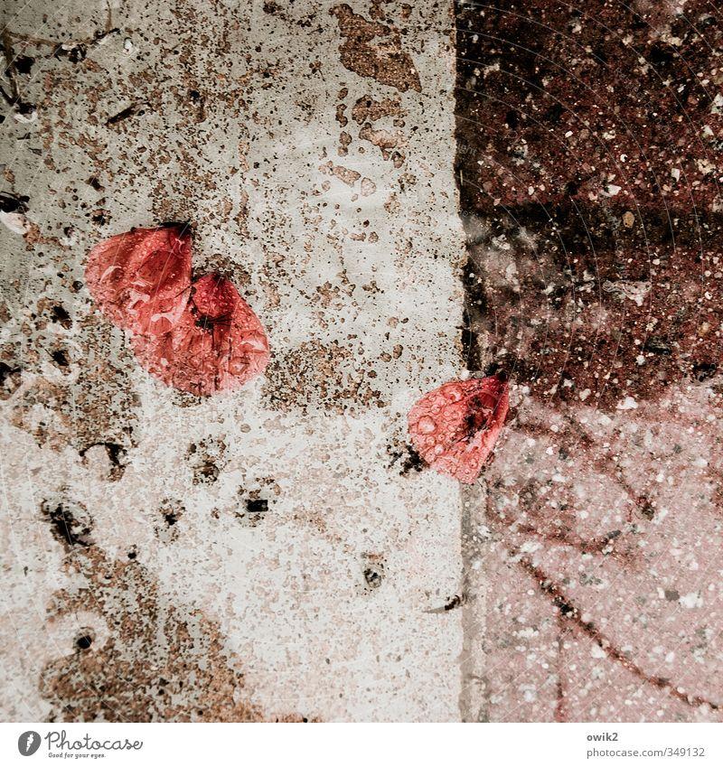 Deko 10 | Mohnblätter Natur Wasser Pflanze rot Umwelt Traurigkeit klein Stein natürlich Wetter Klima nass Beton trist Wassertropfen einfach