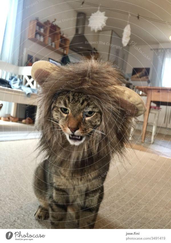 Stubentiger, sieht man nur selten, Schnappschuss gelungen, bevor er wieder unterm Sofa verschwand Tigerkatze stubentiger Katze Hauskatze Tigerfellmuster