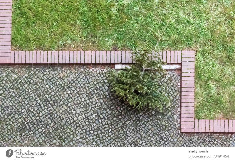 Der Weihnachtsbaum steht am Ende des Kopfsteinpflasters weg Hintergrund Ast Niederlassungen Weihnachten Großstadt tot Dekoration & Verzierung Entsorgung