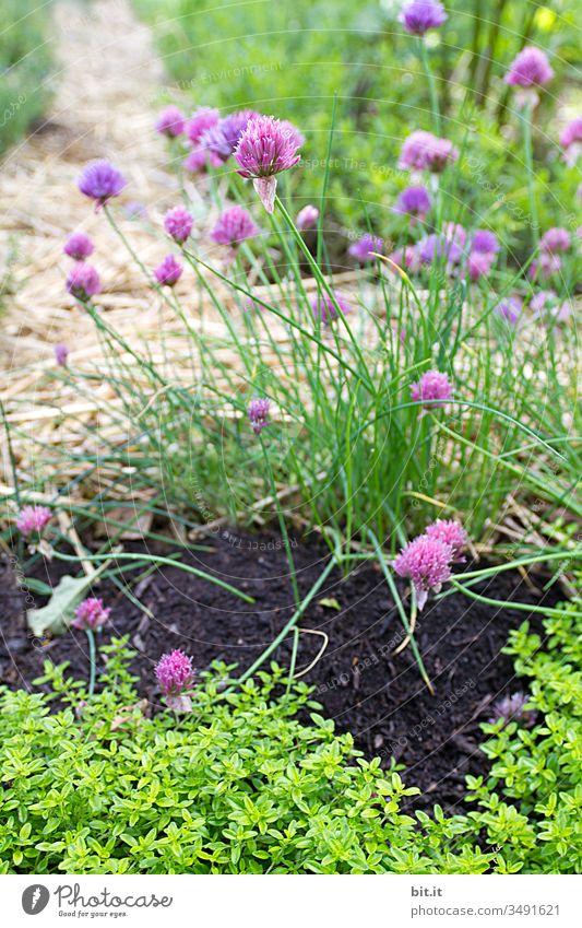 Gegen alles ist ein Kraut gewachsen, fast. Schnittlauch Garten Erde grün Pflanze Kräuter & Gewürze frisch Natur Nutzpflanze Bioprodukte Ernährung Gesundheit