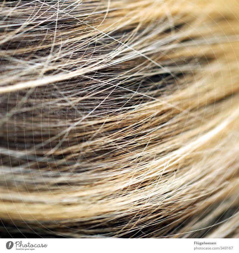 haarige Angelegenheit Lifestyle schön Körperpflege Haare & Frisuren Haut Gesicht Schwimmen & Baden Haarschnitt Haarsträhne Haarschopf Haarfarbe Haartrockner