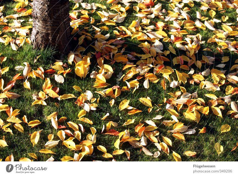 Herbst des Lebens Ausflug Umwelt Natur Landschaft Klima Klimawandel Wetter Wind Pflanze Baum Gras Blatt Senior Seniorenheim Großvater Großmutter Großeltern