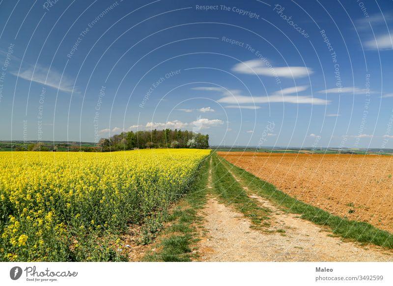 Frühlingslandschaft mit leuchtend gelben Rapsfeldern Natur Feld Landschaft Himmel hell ländlich Sommer Blume grün Wiese blau Saison Ackerbau Pflanze Umwelt