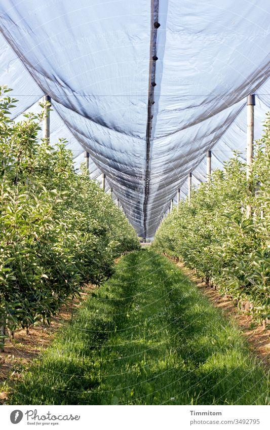 Wachstumsbeschleuniger Plantage Obst Abdeckung Plane Schutz Gewächse Spuren Außenaufnahme Menschenleer grün Landwirtschaft Kunststoff Natur Nahrungsmittel