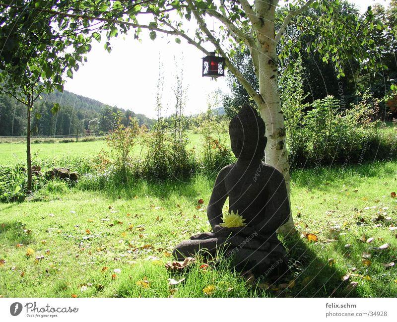 Buddha Garden Erholung ruhig Sonne Garten Skulptur Natur Baum Gras Sträucher Park Wiese Stein grün friedlich Weisheit Frieden Idylle Birke Statue Esoterik