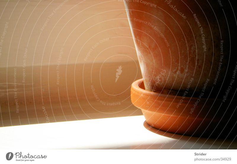 Fensterbank... Sonne ruhig Fenster orange Häusliches Leben Topf Nachmittag Blumentopf Fensterbrett Zimmerpflanze Tontopf