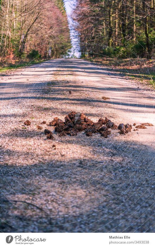 Pferdeäpfel auf Waldweg Froschperspektive Tag laufen braun grau Ekel Scheiß Ausscheidungen Kot Pferdeapfel Tier wiederlich ihh eklich pferdeäpfel pferdekacke