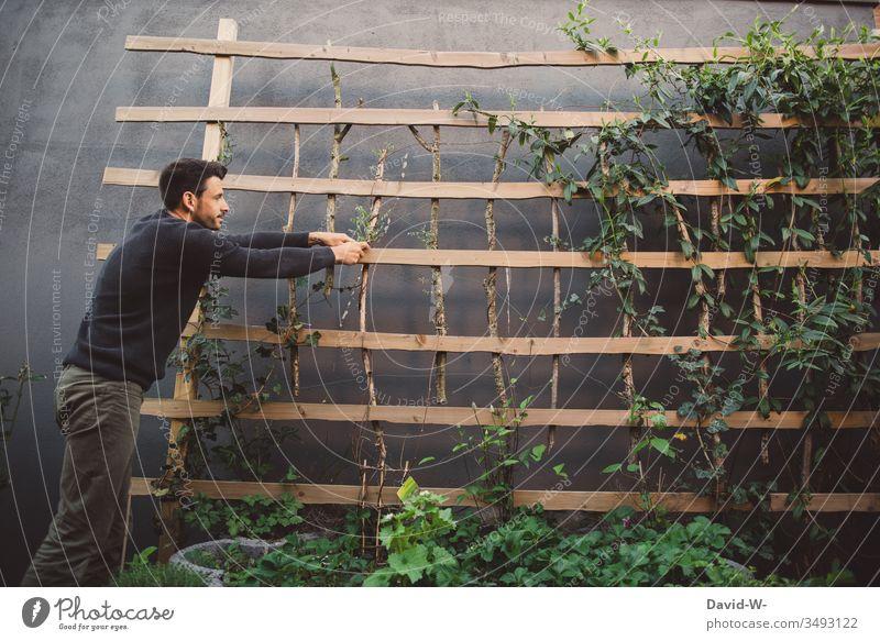 selbstgemacht - Spalier im Garten bepflanzen Mann Pflanzen Gartenarbeit Gartenbau Kreativität kreativ Draht festbinden Kletterpflanzen Clematis Efeu Holz