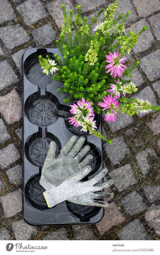 Gartenhandschuhe und Pflanze mit schwarzer Einwegpalette Gartenarbeit Palette Plastik Kunststoff Steine Blume Sommer Handschuhe Freizeit & Hobby einbuddeln