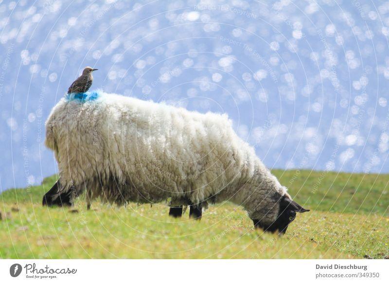 Punktlandung Natur Ferien & Urlaub & Reisen blau grün Wasser Sommer Pflanze Meer Tier schwarz gelb Wiese Gras Frühling Küste braun