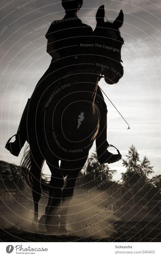 Der schwarze Reiter Mensch Himmel Natur Baum Landschaft Tier Sport laufen Abenteuer Bodenbelag Pferd Abenddämmerung Anschnitt Reitsport Reiten