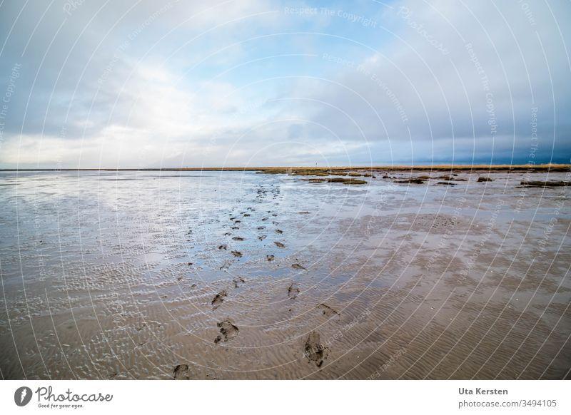 Fußspuren im Watt Wattenmeer Wattwandern Nordsee Meer Außenaufnahme Wasser Ebbe Küste Ferien & Urlaub & Reisen Ferne Himmel Reflexion & Spiegelung blau Umwelt