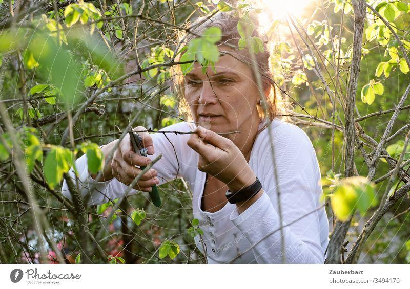 Gärtnerin im Sonnenlicht schneidet konzentriert einen Zweig mit der Gartenschere schneiden beschneiden grün T-Shirt weiß Hände Mensch schön Natur Frühling