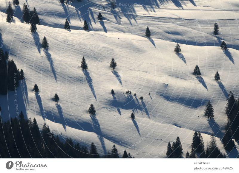 Schattendasein III Umwelt Natur Landschaft Pflanze Winter Schönes Wetter Eis Frost Schnee Baum kalt schwarz weiß Schneelandschaft Schneedecke Schattenspiel