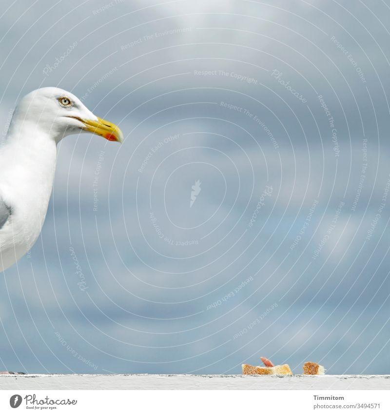 Möwe bewacht Mahlzeit Kopf Schnabel Vogel Tier Futter Brot Salami Windschutz Holz Himmel Wolken Dänemark Auge