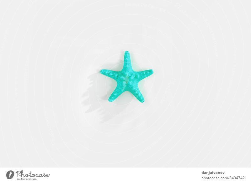 Seesterne isoliert auf weißem Hintergrund Strand blau Dekoration & Verzierung Design vereinzelt marin Natur Meer MEER Panzer Stern Sommer tropisch