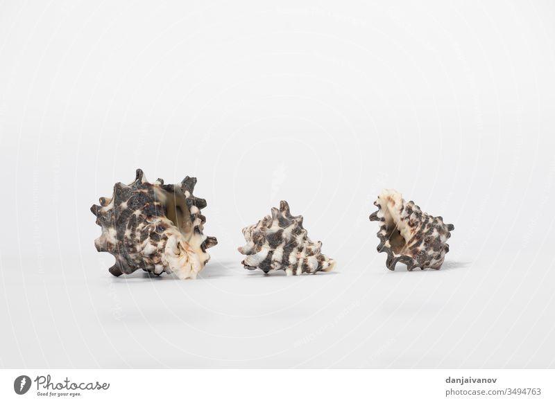 Muscheln isoliert auf weißem Hintergrund Strand Nahaufnahme Lebensmittel Gesundheit vereinzelt Makro Medizin natürlich Natur Meer Perle Tablette Pillen MEER