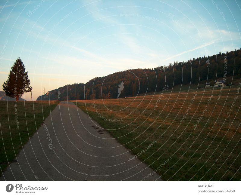 Landstrasse Natur Berge u. Gebirge Wege & Pfade Landschaft Tanne Alm