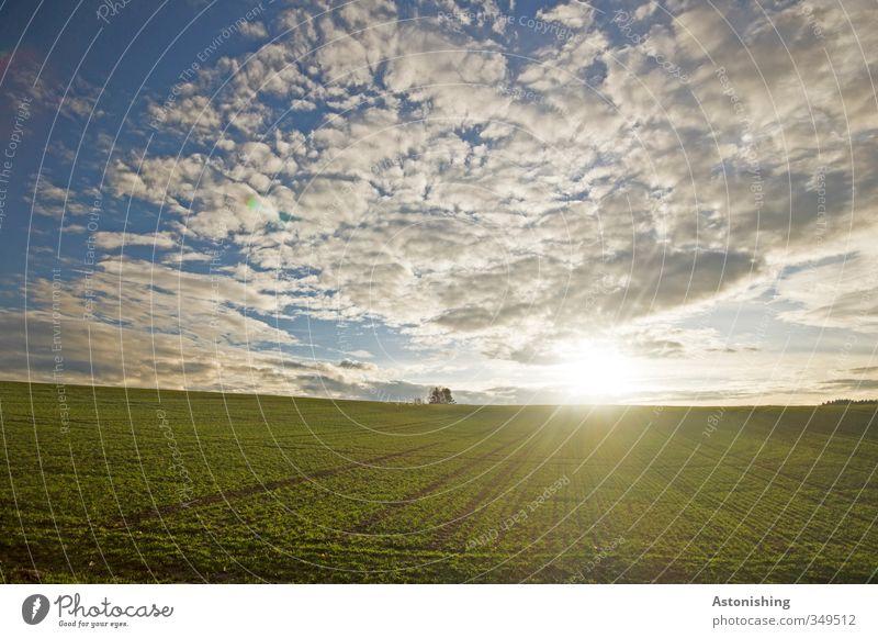 Abendsonne III Himmel Natur blau grün weiß Sommer Pflanze Sonne Landschaft Wolken Umwelt gelb Wiese Wärme Gras hell