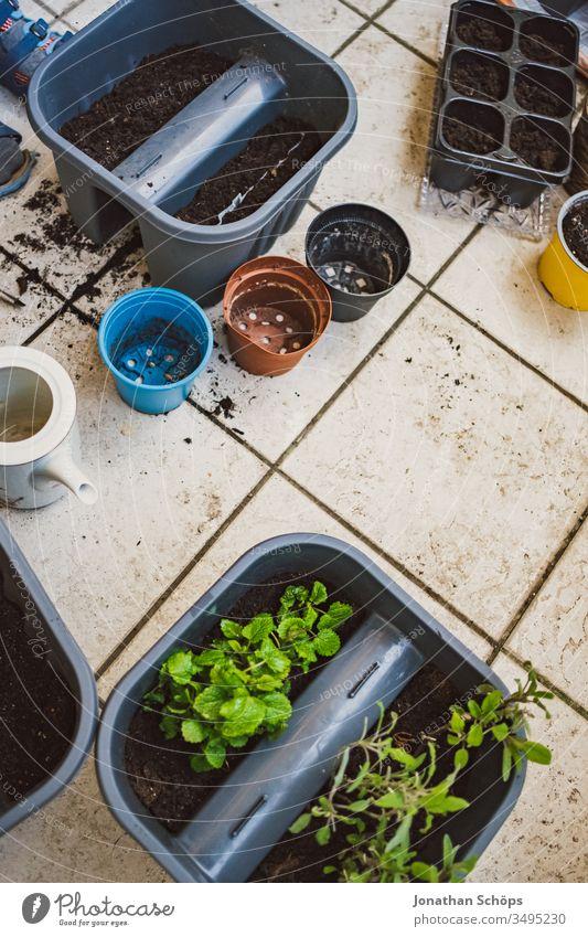 Zitronenmelisse und Salbei in einem Blumenkasten auf dem Balkon zwischen anderen Blumentöpfen Nahaufnahme Balconing Balkonbepflanzung Balkonkasten Blumentopf