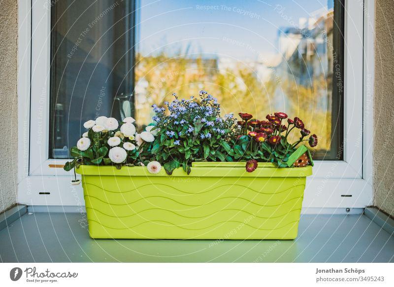 grüner Blumenkasten auf dem Fensterstock außen Balconing Balkon Balkonbepflanzung Balkonkasten Hobby Hoffnung Kasten Saat Samen anpflanzen begrünen bio bunt