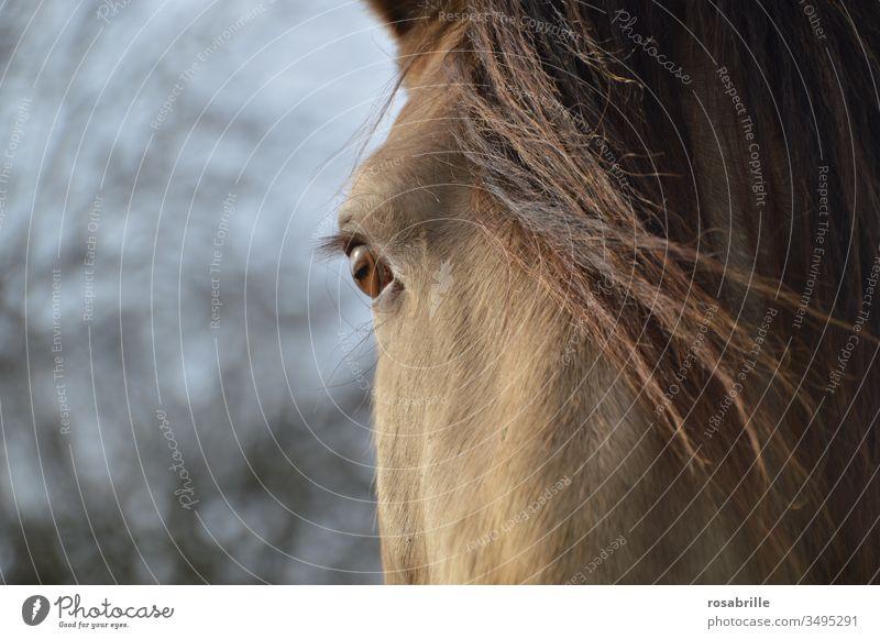Illusion | Pferdeaugen sehen die Welt anders als wir sie sehen Auge Nahaufnahme Detail Tier Haustier Reittier Lebewesen Mähne schauen Blick Optik optisch