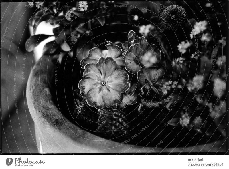 Blumentopf Dinge Topf Grauwert