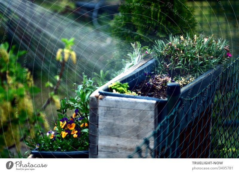 Alles neu macht der Mai: Pflanzkästen mit Pflanzen an einem Zaun im Garten, wo ein heller Wasserstrahl aus der Dusche alles Grün frisch macht und zum Leuchten bringt