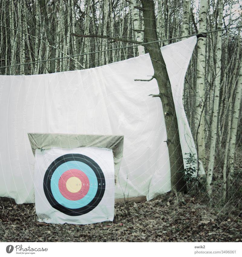 Tatort Zielscheibe Bettlaken Schutz Bäume Birken Herbst Menschenleer Natur Landschaft Wald Baum Himmel weiß rund Kreise mehrfarbig bunt