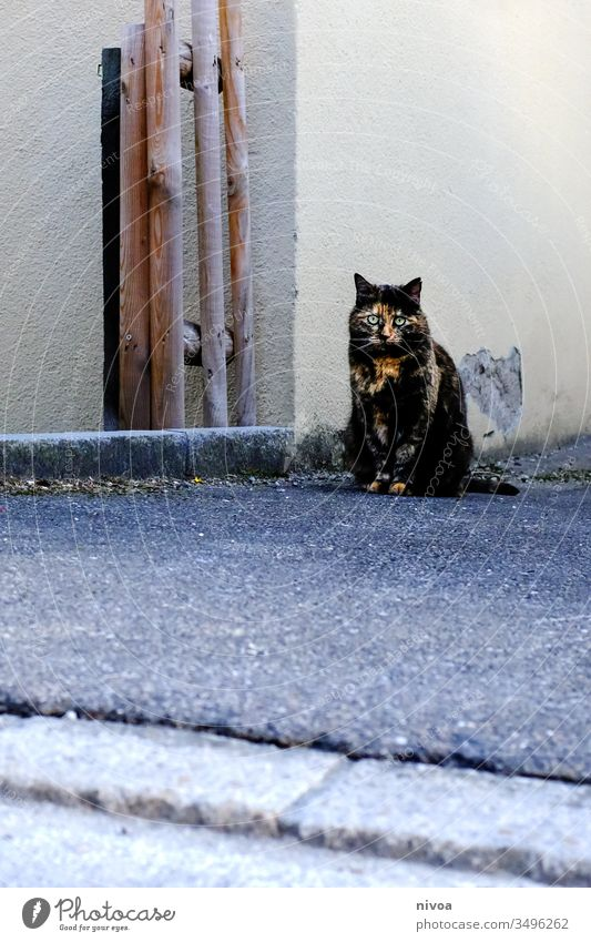 Katze sitzt an einer Hausecke Haustier Tierporträt Häusliches Leben Farbfoto 1 Innenaufnahme Tag Wohnung Schwache Tiefenschärfe niedlich Menschenleer