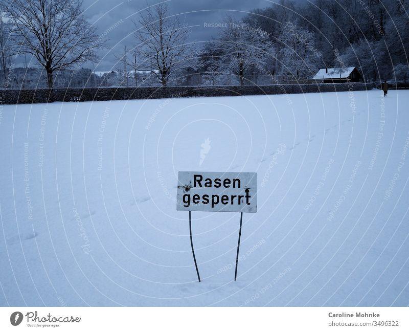 """Schild """"Rasen gesperrt"""" auf schneebedecktem Rasen rasen schild hinweisschild Tag Schafe schneebedeckter Rasen Schilder und Schriftzüge Schrifttafel Winter"""