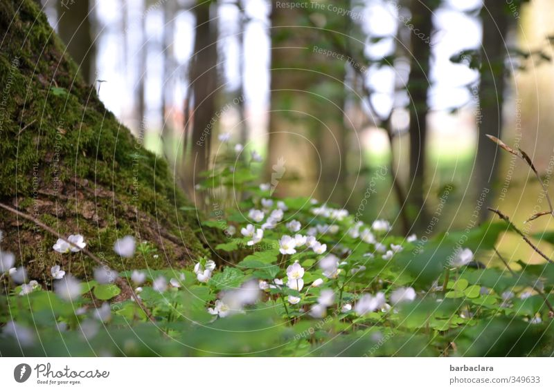 tief einatmen Natur Sommer Baum Moos Blatt Blüte Klee Wald Duft Erholung genießen leuchten Wachstum frisch hell viele wild grün weiß Lebensfreude ruhig Umwelt