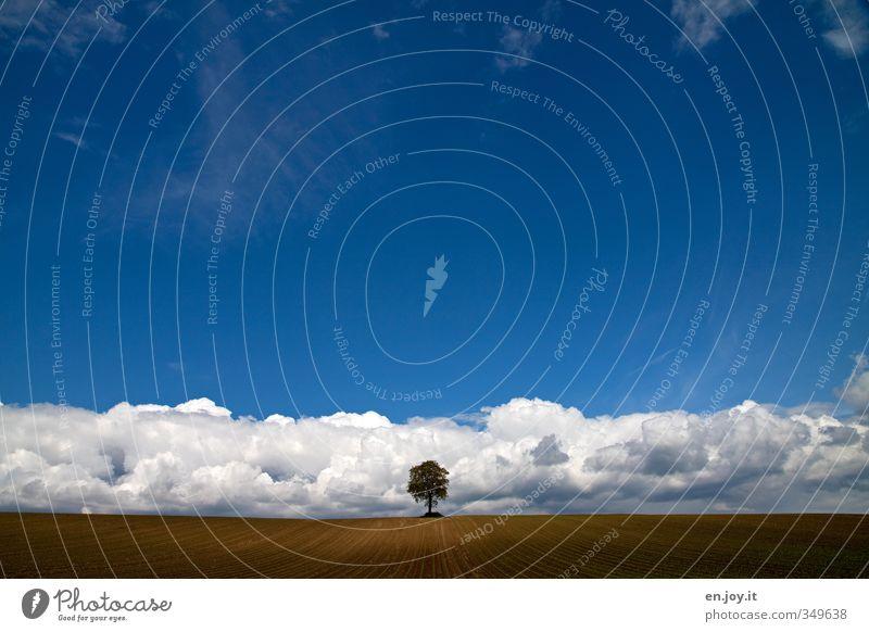 Tiefdruck? Himmel blau weiß Pflanze Baum Einsamkeit Landschaft Wolken Ferne Frühling Horizont braun außergewöhnlich Wetter Angst Feld