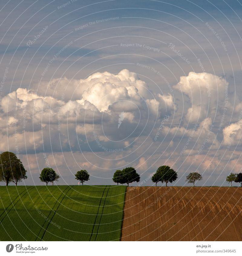 Farmer Style Himmel blau grün Pflanze Baum Landschaft Wolken Umwelt Horizont braun Wetter Feld Erde Klima Zufriedenheit Wachstum