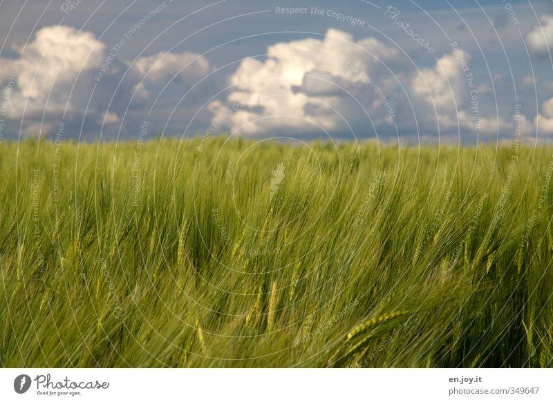Wohlstand Himmel blau grün Pflanze Landschaft Erholung ruhig Wolken Gesundheit Horizont Wetter Feld Wind Klima Zufriedenheit Wachstum