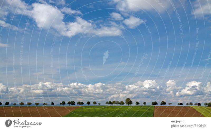 Ordnung muss sein! Himmel Natur blau grün Sommer Pflanze Baum Landschaft ruhig Wolken Umwelt Ferne Horizont braun Wetter Feld